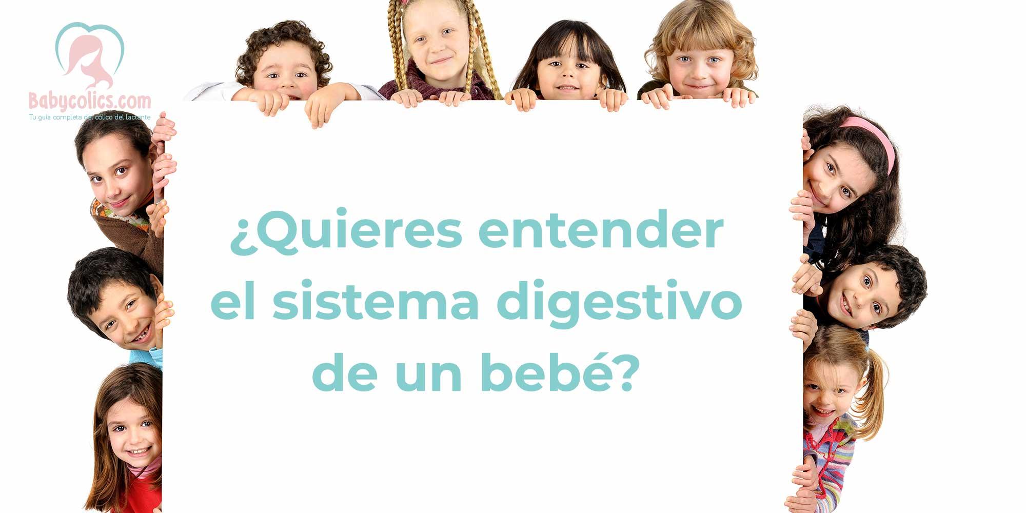Sistema Digestivo de un bebé
